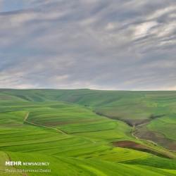 طبیعت بهاری دشت مغان | عکس