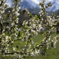 طبیعت بهاری همدان | عکس