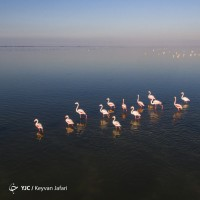 میانکاله؛ زیستگاه پرندگان مهاجر | عکس