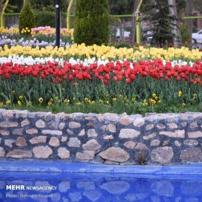 جشنواره گل لاله؛ اراک | عکس