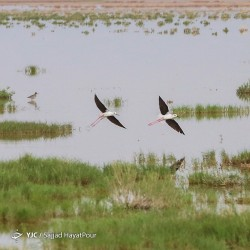 تالاب مره، بهشت پرندگان مهاجر | عکس