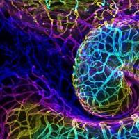 برندگان مسابقه عکاسی دنیای کوچک نیکون ۲۰۱۸ از موجودات میکروسکوپی | عکس