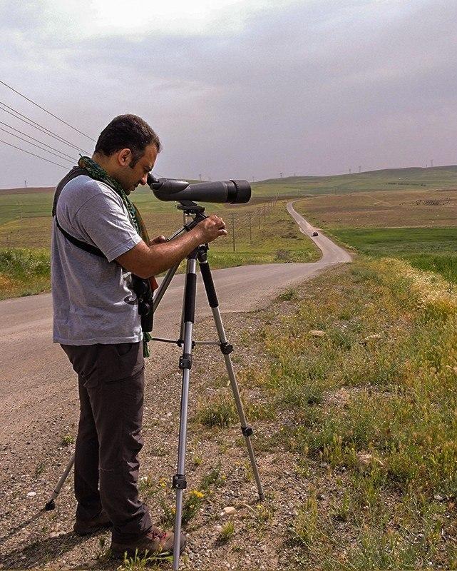 پرندگان در ادبیات ایران | عکس