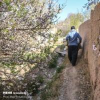 شکوفههای بهاری در یزد | عکس