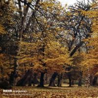 پاییز هزار رنگ گلستان | عکس