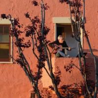 پنجره و بالکنهای جهان در روزهای کرونا   آکلند، آمریکا