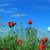 طبیعت بهاری منطقه آزاد «ارس» | عکس