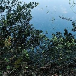 دریاچه ممرز نوشهر | عکس