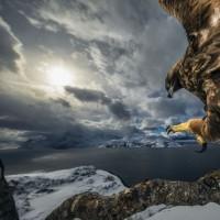 عجایب حیاتوحش | عکس