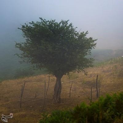 طبیعت سوباتان | عکس