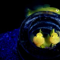 برندگان مسابقه عکاسی هنر اقیانوس | عکس