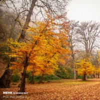 پاییز هزار رنگ جنگل های هیرکانی | عکس