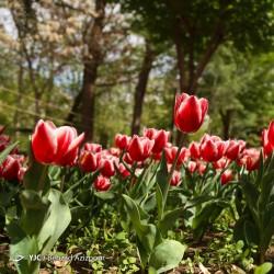 طبیعت بهاری تبریز | عکس
