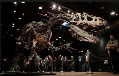 ۳ میلیون یورو برای اسکلت یک دایناسور | عکس