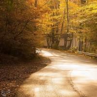طبیعت پاییزی گرگان | عکس