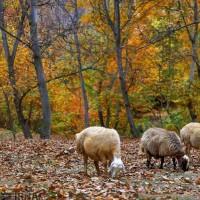 طبیعت پاییزی روستای «مهنان»، خراسان شمالی   عکس