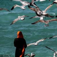 پرندگان دریایی در سواحل بوشهر | عکس