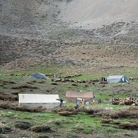عبور عشایر ترکاشوند و یارام طاقلو از لرستان | عکس