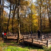 پاییز النگدره و هزار جریب | عکس