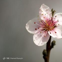 طبیعت بهاری ابهر | عکس