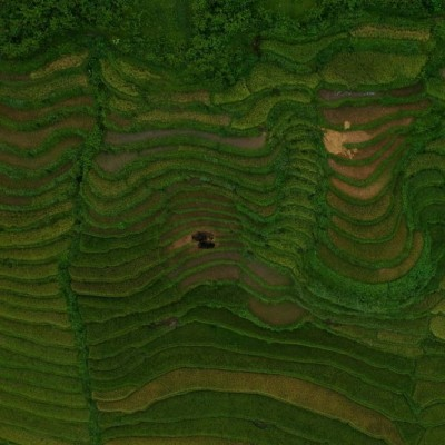 مزارع پلکانی برنج؛ ویتنام | عکس