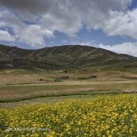 بهار یاسوج | عکس