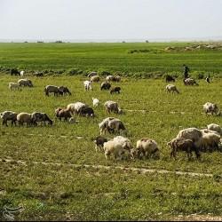 طبیعت پاییزی ایذه بهشت خوزستان | عکس