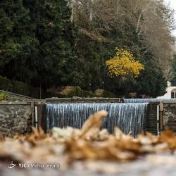 پاییز باغ شاهزاده ماهان | عکس