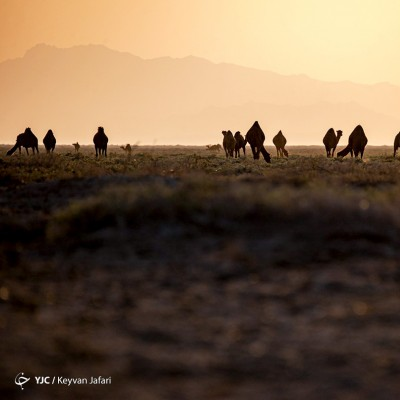 کویر مرنجاب | عکس