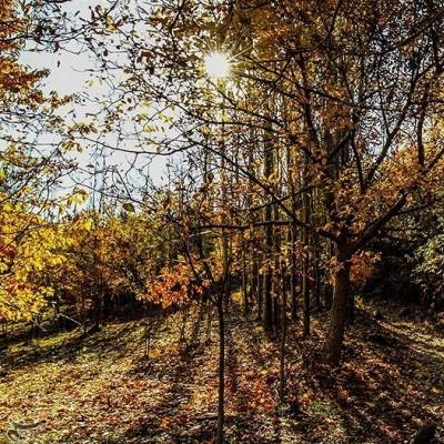 طبیعت پاییزی روستای سیلوار همدان | عکس