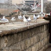 پرندگان مهاجر، شیراز | عکس