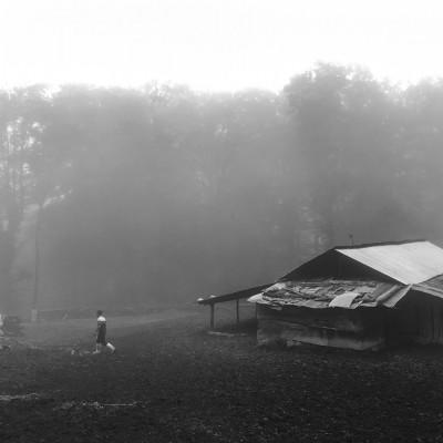 عکسهای موبایلی بخش اول | زندگی در جنگل - زهره صحت