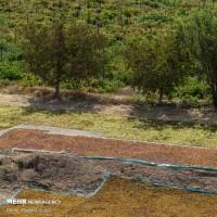 تاکستانهای قزوین | عکس
