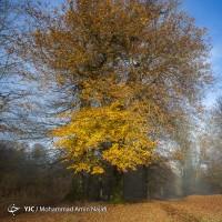 طبیعت پاییزی مازیچال  | عکس