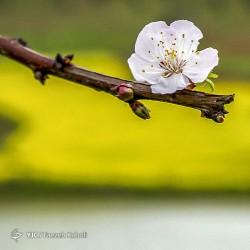 طبیعت زیبای بهاری در گلستان | عکس
