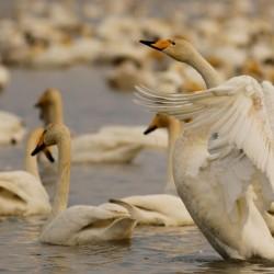 گردش پرندهنگری در فریدونکنار | عکس