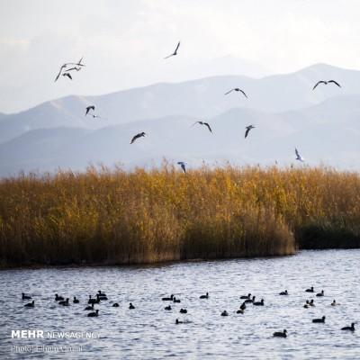 زریوار؛ بزرگترین چشمه آب شیرین ایران | عکس
