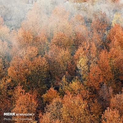 بازی رنگها در پاییز | عکس