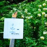 هفتمین جشنواره گلدهی گل سوسن چلچراغ | عکس