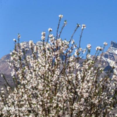 زمستان بهاری یزد | عکس