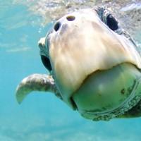 برندگان مسابقه عکاسی زیر آب  | عکس