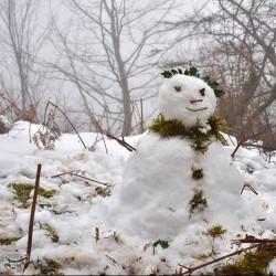 طبیعت زمستانی سیاهکل | عکس
