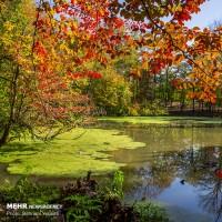 طبیعت چشم نواز پاییزی مازندران | عکس