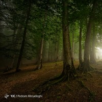 جنگلهای هیرکانی | عکس