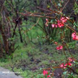 طبیعت بهاری اردبیل | عکس