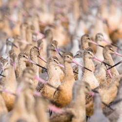 برندگان مسابقه پرندهنگری ۲۰۱۹ | عکس