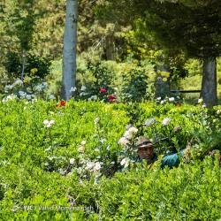 باغ گلهای اصفهان | عکس