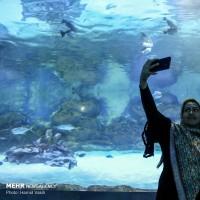 تونل آکواریوم اصفهان | عکس