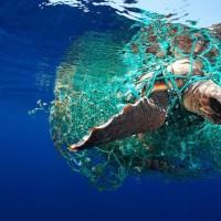 روز جهانی حیات وحش | عکس