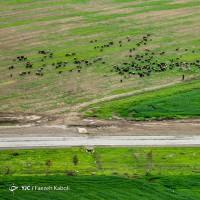 تصاویر هوایی از بهار گلستان | عکس